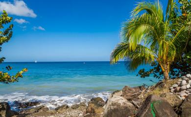Trees in the Beach, Grenada, Caribbean