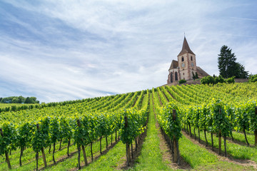 Wall Murals Vineyard vineyard and medieval church in Alsace, France