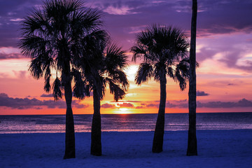 Palm Trees Silhouette with Sunset, Horizontal