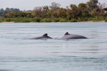 Khongyai beach irawaddy dolphins trip
