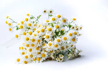 Chamomile flowers bouquet on white background