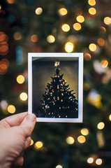 Hand Holding Photo of a Christmas Tree