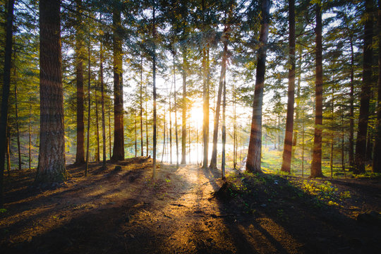 Sunlight through forest with beautiful sunbeams