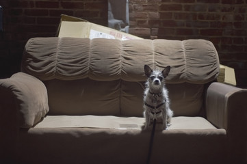 Dog in pool of light on an abandoned sofa in alley