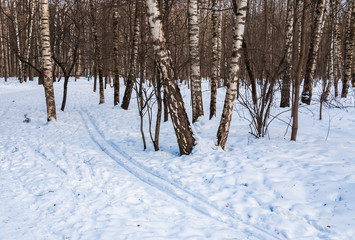 Trail and ski track in the winter snowy forest