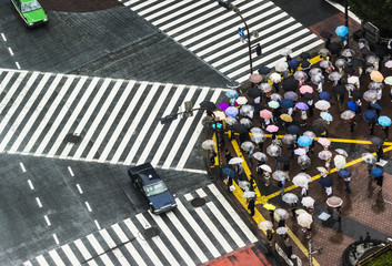 People with umbrellas in rain, waiting at Shibuya Scramble Intersection