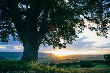 A tree on the Tuscan hills
