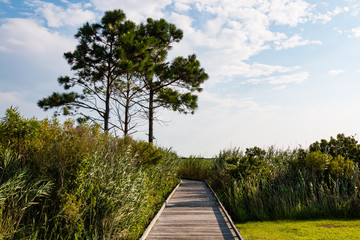 Pathway leading to observation point through marshland at the historic Bodie Island lighthouse on the Outer Banks of North Carolina.