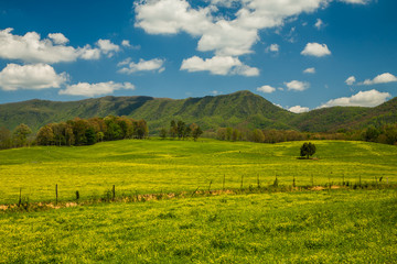 Spring, English Mtn Area