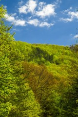 Spring, Foothills Parkway