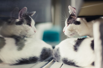 White and grey cat staring at his reflection in the window