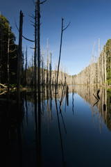 Peaceful lake and forest in mountain