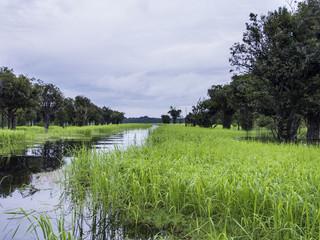 Tributary off the Amazon - Rio Negre river, Brazil