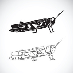 Vector of grasshopper on white background. Insect Animal.