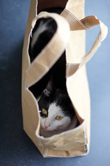 Young cat hiding in a brown paper handbag.