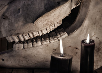 Black candles and close up of horse skull. Mystic Halloween still life