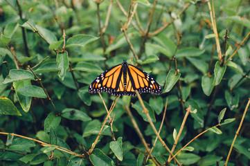 monarch butterfly on a bush