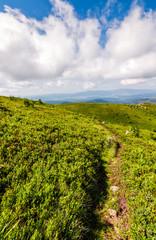 path through the mountain ridge in summer