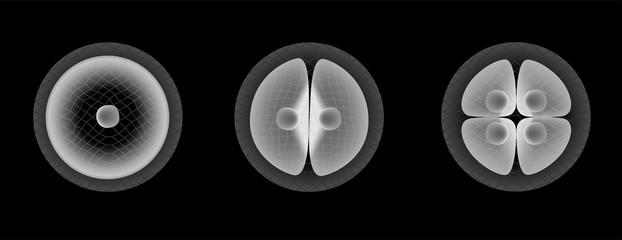 stem cell part 1 vector
