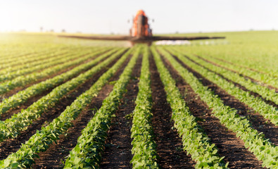 Fotomurales - Tractor spraying soybean field