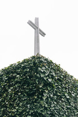 Ivy and cross