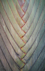 Nature - close-up of a green palm leaf