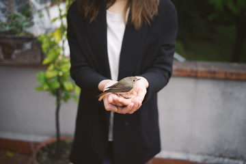 Taiwanese girl with a bird in the hands