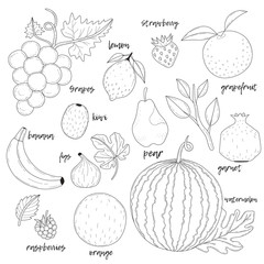 Set of hand drawn fruits.