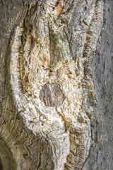 Redwood cork - wooden background