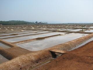 salt salt extraction food industry India