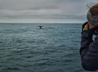 mujer haciendo fotos a ballena en safari fotográfico en barco. Islas Vesteralen, Noruega