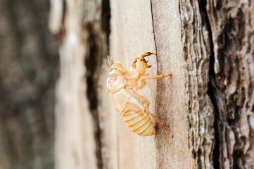 Larva di libellula