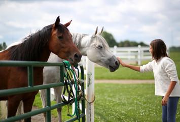 A Girl Pets A White Horse