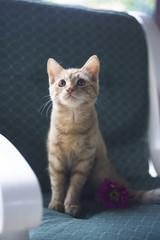 Cute yellow kitten