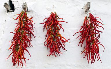 Red dry peppers hanging on the wall