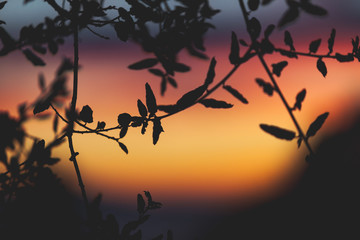 Close up of a tree set against a vibrant and colorful sunset.