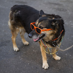 Dog With Sunglasses and Beads on Bourbon Street