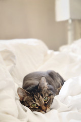 Cat laying on bed and relaxing