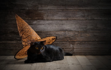 black cat in witch hat on wooden background