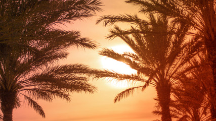 Tropical Palm Tree Leaves with Sun, Horizontal