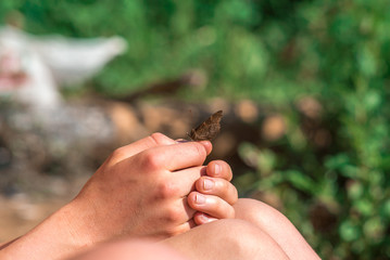 Butterfly in girl's hands - care about nature concept