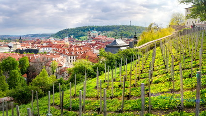 Orchard above beautiful Prague in Czech, Europe