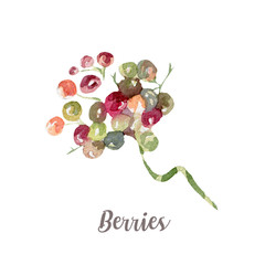 Watercolor hand drawn berries. Isolated illustration on white background