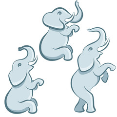Elephant in various poses