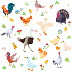 Farm birds and their ducklings in cartoon style as seamless pattern / Rooster, turkey, ostrich, hen, geese and their ducklings in one seamless pattern