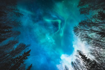 Looking up at Northern Lights