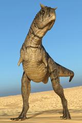 carnotaurus looking for food on desert