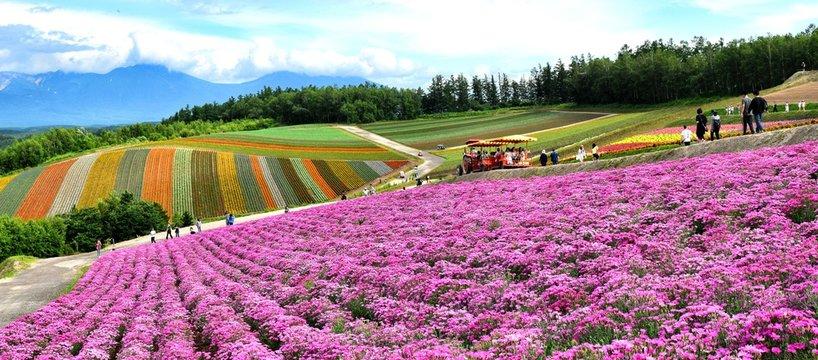 北海道、美瑛、四季彩の丘