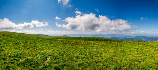 hillside panorama in mountains in summer