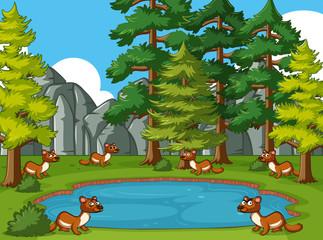 Keuken foto achterwand Magische wereld Mongooses living by the pond